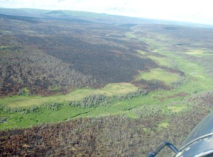 Photo by David Wartinbee. Deep Creek winds through a section of forest ravaged by wildfire in the Caribou Hills fire in 2007.