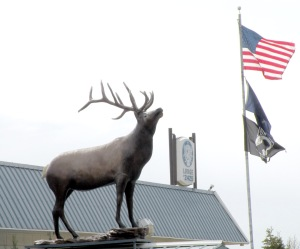 Photo by Jenny Neyman, Redoubt Reporter. An 8-foot tall, 700-pound bronze elk statue adorns the entryway to the Elks Lodge in Kenai.