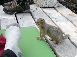 A ground squirrel is brave in visiting a campsite July 8.