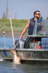 Streamlined biologists testing advanced fish counting for Kenai river fish counts