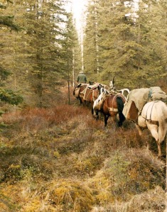 Eugene Hansen Leads A Line Of Pack Horses Up The Horse Trail In October 1983