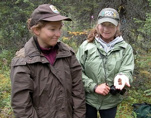 Lily Lewis, right, displays snowshoe hare pellets she and Heather Sinclair, left, found in one counting site of a pellet grid off Funny River Road on Aug. 17. The hare population cycle is trending upward on the peninsula.