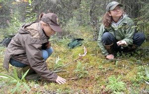 Heather Sinclair and Lily Lewis search for snowshoe hare pellets in a one-meter-square grid area off Funny River Road Aug. 17 as volunteers for the refuge's annual hare pellet count. Measuring pellet density is a way to estimate the local hare population.