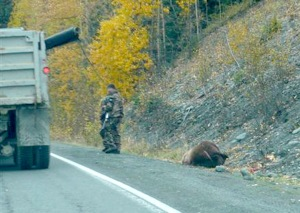Photo courtesy of Russell Hepner. Unidentified hunters stand near a brown bear shot alongside the Sterling Highway near Cooper Landing on Oct. 3. The U.S. Fish and Wildlife Service reports the incident is still under investigation.