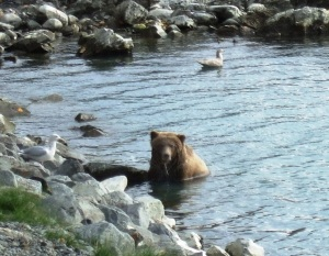 File photo. Brown bears frequent the confluence of the upper Kenai River and the Russian River in the summer and fall. The area is closed to the discharge of firearms, but that didn't stop hunters Sept. 5 from shooting and harvesting two brown bears in the area, in view of anglers and other people in the area.