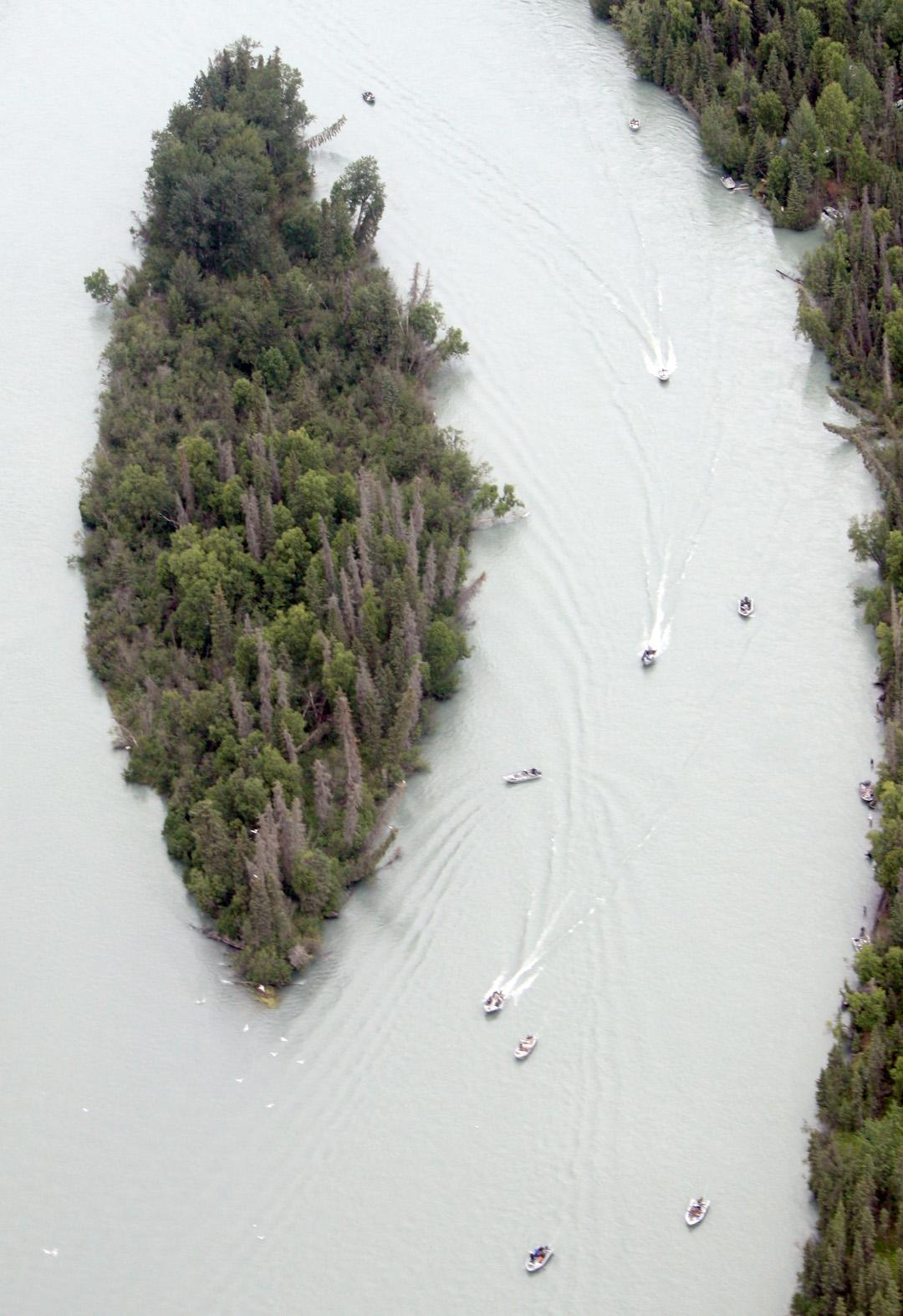 Kenai king season lacks luster low run inaccurate sonar for Kenai river fish counts