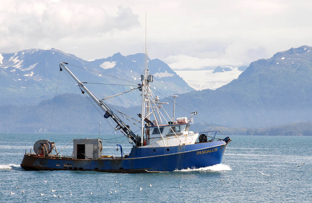 Fish or cut bait aquaculture association casting for new for Commercial fishing boats