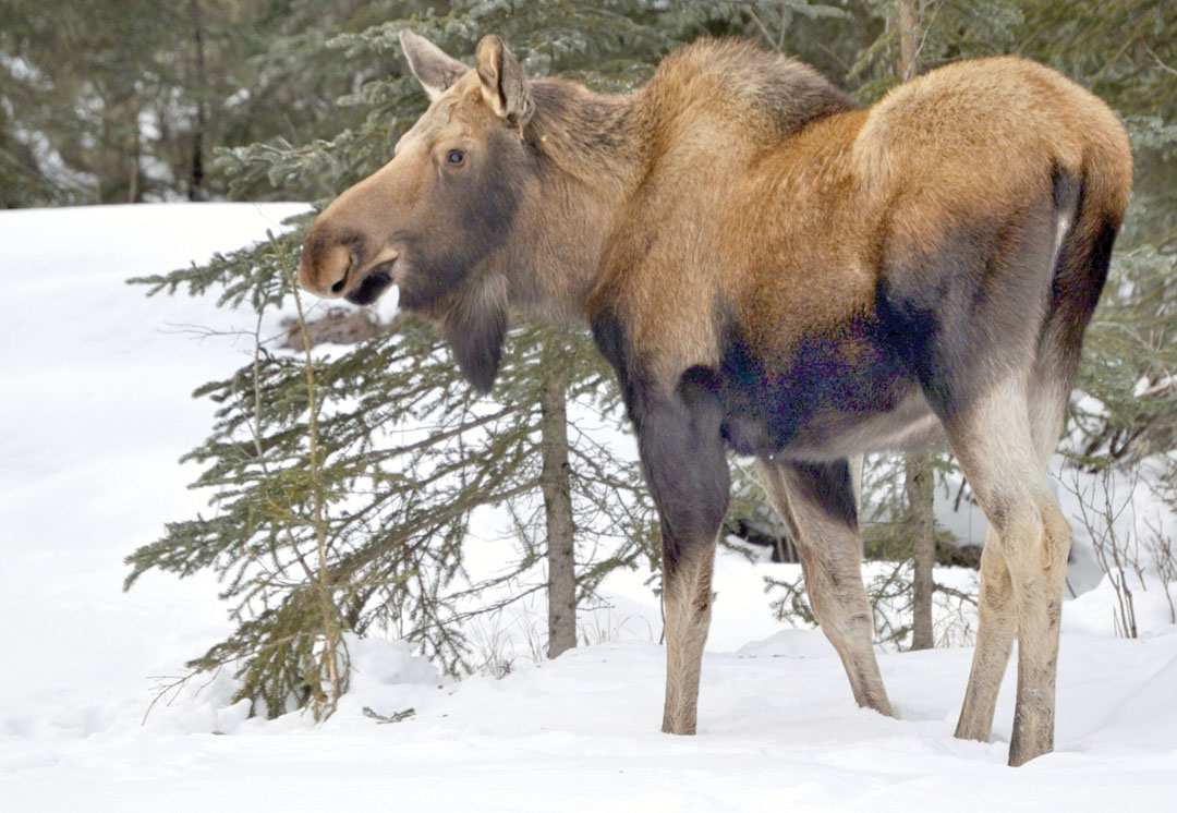 moose dating site Meet these members below that are online now on page on our online dating and personals site.