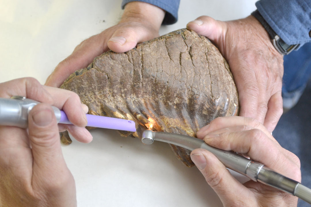 Radiocarbon dating of fossils