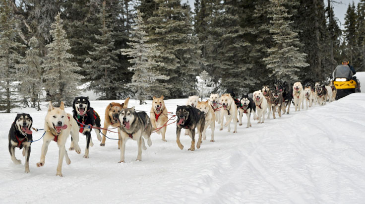 Iditarod Alaska Centers