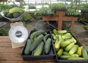 Redoubt Reporter file photo. As the growing season continues, more and more locally grown produce goes on sale at area farmers markets. Organizers say they haven't yet seen an end to the rising demand.