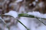 """Snow Grass"" was taken Oct. 16, by Hannah Joy, of Soldotna."