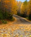 """Rustling, Swanson River Road,"" by Jennie Barenholtz, of Kenai, taken Sept. 25."