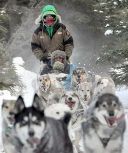 Photos by Joseph Robertia, Redoubt Reporter. Gavan and Margaret Brown of Victoria, Australia, take a dogsled ride in Kasilof before leaving Alaska. The two spent a year here on a teacher exchange program. Gavan taught at Kalifornsky Beach Elementary, while Margaret spent time in numerous central Kenai Peninsula schools as a substitute teacher.