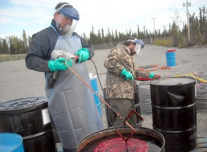 Todd Eskelin and Toby Burke mix cow blood and fish oil, to be used as lure for bears at the lure stations.