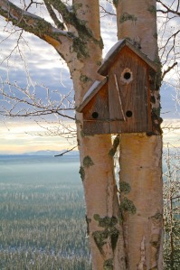 "Fourth Place: ""Birdhouse in Birch Tree,"" by Clark Fair, of Sterling."