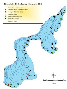 A map documents the spread of elodea in Stormy Lake in September 2012.