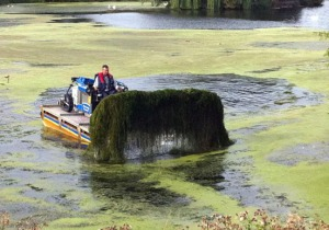 Photos courtesy the Kenai National Wildlife Refuge. Attempts to remove elodea from a lake in the Lower 48. The plant was  discovered on the Kenai Peninsula last year.