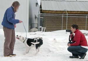 Ellen Sheehan, of Nikiski, and Amanda Motonaga, of Soldotna, both volunteers with the Peninsula Spay and Neuter Fund, take pictures of dogs at the Kenai shelter last week to spread the images on the Internet and around town in the hope of more animals being adopted.