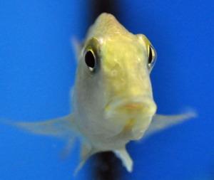 petshop fish