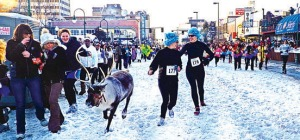 Photo courtesy of Stephanie Wright. Reindeer trot up the street in the women's heat of the annual Running of the Reindeer event of Fur Rondy on Saturday in Anchorage.