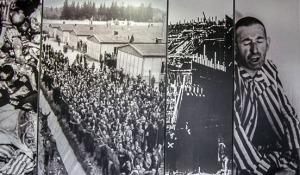dachau Display of camp photos