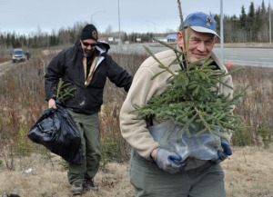 Photo by Joseph Robertia, Redoubt Reporter. John N. Trent of Anchorage carries a freshly dug spruce tree to his car, while fire prevention officer Paul Pellegrini assists him with other saplings, during a new Go Wild Roadside Tree Seedling Dig in Sterling on Saturday.