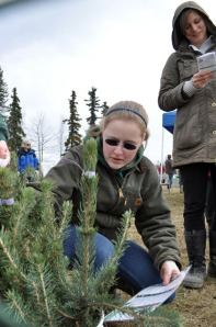 Eli Butler, a 4-H member, selects a young tree for a prospective buyer during the annual Kenai Peninsula Tree Sale on Saturday.