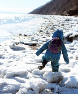 4-year-old Katmai toddles along chunks of ice brought in by the tide.