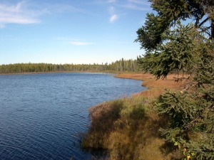 Photo courtesy of Dr. David Wartinbee. Lakes in the Kenai Peninsula Borough, like this one in Nikiski, that host anadromous fish are now covered under the borough's anadromous habitat protection ordinance. The fate of that ordinance is scheduled to be determined at the assembly's June 18 meeting.