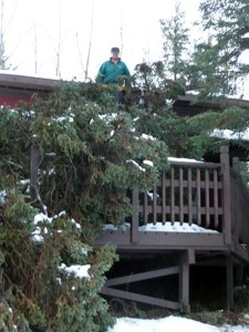 Photo courtesy of Jim Harpring. Tom Mushovic stands on the roof of the guest cabin belonging to his neighbors, Jim and Ginny Harpring, along the bank of the Kenai River in Funny River, assessing damage from a tree that blew down during a storm in the winter of 2011.
