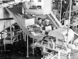 "Photo from the KPC Anthropology Department Photograph Archive. An ""Iron Chink"" being operated at a Kenai cannery, date unknown."