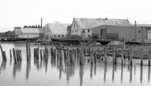 Photos courtesy of Alan Boraas. Libby Cannery's docks in Kenai in 2001.