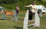 A contestant jogs alongside her dog as it clear hurdles in an agility course.