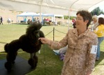 Maran Bowser prepares poodle Stella for judging in the dog show.