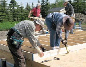 habitat hammering