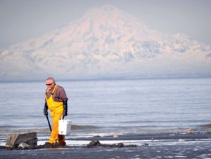 Rudy Bryant, of Bird Creek, scans the beach for signs of dimples while clamming just north of Clam Gulch in April 2011.