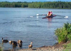 A family of ducks don't give a quack about the activities of the Alaska Midnight Sun Rowing Association, including Saylor and Demers setting out from shore. Rowers have enjoyed a particularly sunny, warm season on the lake this year.