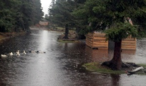 Photos courtesy of Tammy Vollom-Matturro. Waterfowl paddle through a yard in the Karluk neighborhood. Rains over the weekend and into Monday dumped additional water onto already flooded neighborhoods along Kalifornsky Beach Road. The Kenai Peninsula Borough on Tuesday announced a disaster declaration for flooding in the borough this fall.