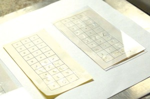Scale cards lined with king salmon scales await pressing to transfer their images into the acetate covering the cards.