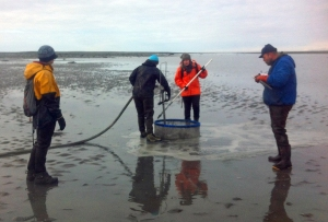 Photo courtesy of.Fish and Game. An Alaska Department of Fish and Game crew conducts a clam survey on the east-side Cook Inlet beach.