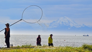 Photos by Joseph Robertia, Redoubt Reporter. The personal-use dip-net fishery at the mouth of the Kasilof River is looking more and more like the crowded Kenai River, with crowds of fishermen descending to the beach and shoreline to attempt to pack their coolers with fish.