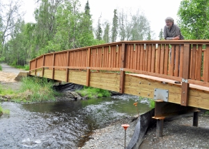 Photo by Joseph Robertia, Redoubt Reporter. Robert Ruffner, executive director of the Kenai Watershed Forum, takes in the view from a new foot/bike bridge over Soldotna Creek. The bridge project was done to remove an old culvert that inhibited fish passage.