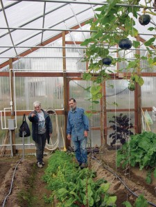 Velma Bittick and Tom Gotcher look over the remains of their once-stuffed high tunnel Tuesday. They maximize space by growing some things vertically, including the squash seen hanging above.