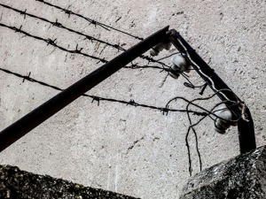 """Electrified Fence Detail - Dachau"""