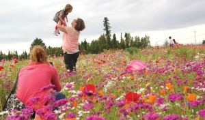 Photos by Jenny Neyman, Redoubt Reporter. The Buchholz-James family poses for family pictures in a field of wildflowers along the Kenai Spur Highway on Monday. Above, Carole Buccholz, of Soldotna, hoists granddaughter Olivia while photographer Shawna Shields of Narrow Road Productions captures the shot. Below, Kristina James coaxes her daughter to smile for the camera.