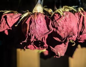 """""""Last Roses"""""""