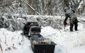 Photos courtesy of PSDRA. A Peninsula Sled Dog and Racing Association volunteers clears a downed tree from a trail last winter.