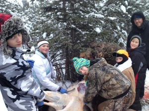 Photo courtesy of Jesse Bjorkman. Trevor Junkert, Zina Schwenke, Ashana Poage, Mike Hamrick, Justin Cox, Josiah Guenther and Rob Guenther work to skin and butcher a moose taken in December as part of an educational youth hunt. The field trip was a cooperative effort between the Nikiski Middle-Senior High School's Alaska outdoor exploration class, parents and volunteers.