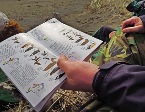 "An important tool of the bird-watching trade: ""The Sibley Guide to Birds."""